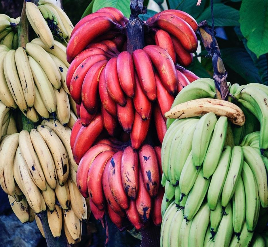 Various banana varieties